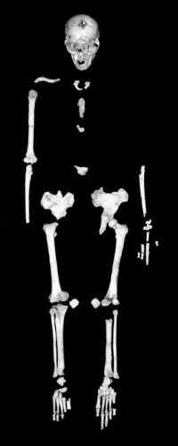 Homo floresiensis skeleton from Liang Bua