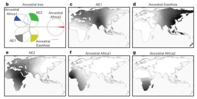 Heliobacteria plyori & Human Migration