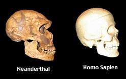 Neandertal Skull versus HumanSkull