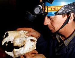 Thylacoleo Skull