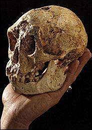 LB 1Skull