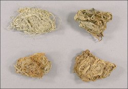 Quids from Native Americans Yield 2,000mtDNA