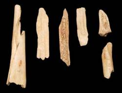 Neandertal long bones show signs of Cannibalism