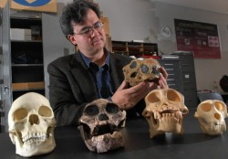 David Strait holds the skull of an Australopithecus boisei