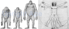 Illustrations of Hominoids