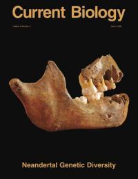 Scladina Neandertal