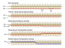 SNT Transposition