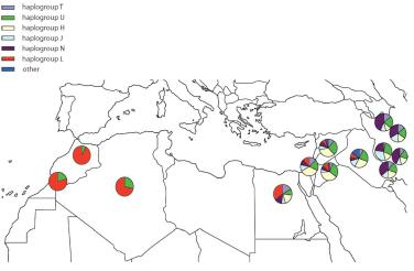 Genetic Relationships of Semitic and Indo-Iranian speaking