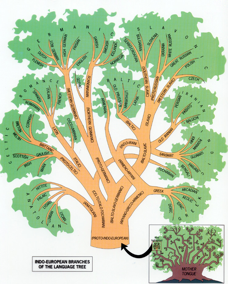 the indo european language tree anthropology  : language tree diagram - findchart.co