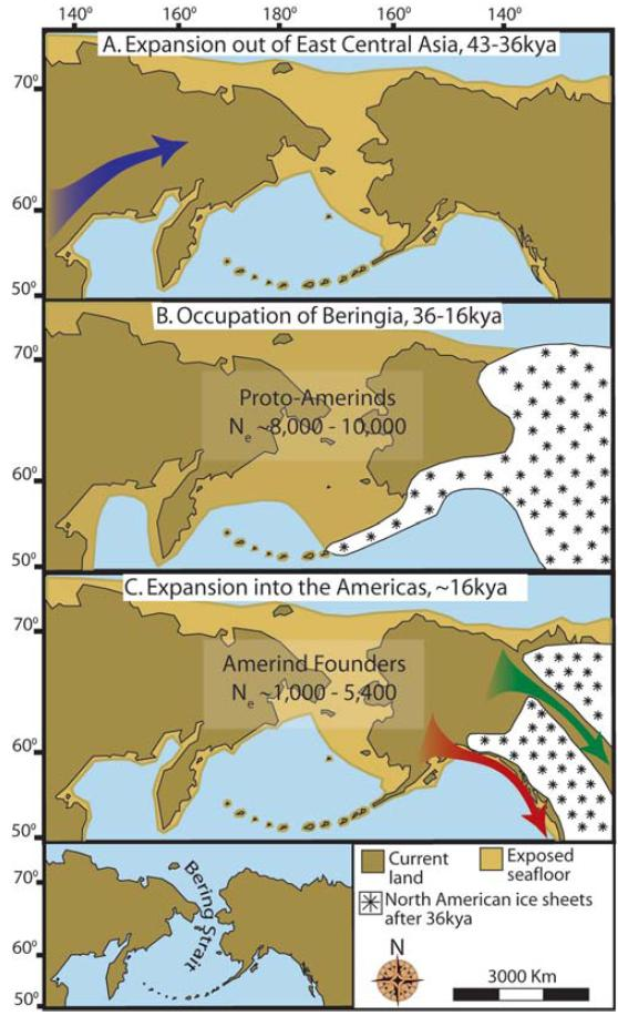 Three Stage Colonization of the Americas