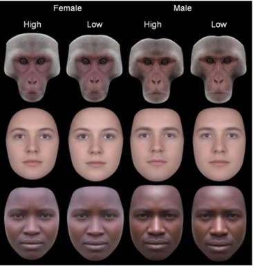 Rate facial symmetry