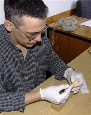 Dusan Mihailovic analyzing the hominid jaw from Sicevo Gorge, Serbia