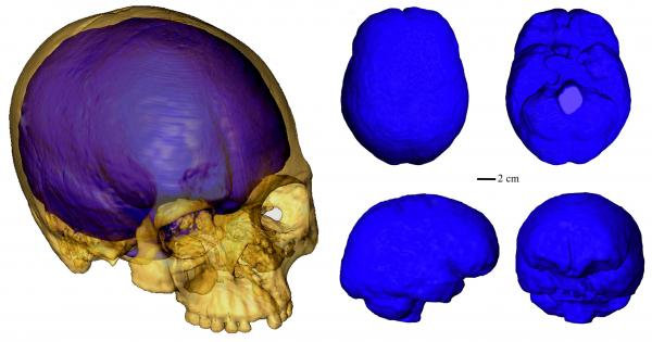3D Computed Tomography Scans of the Liujiang Cranium
