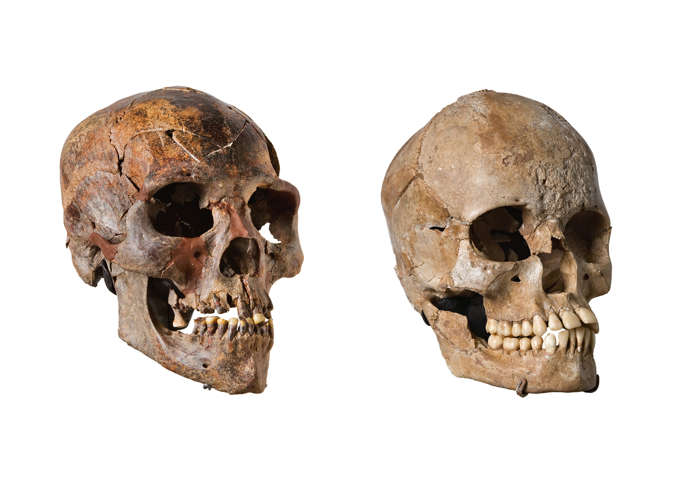 Kiffian (9,500 year old) Skull vs Tenereian (5,800 year ...