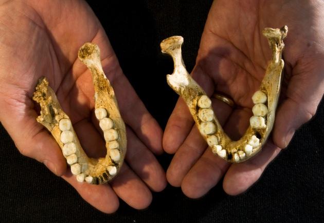 floresiensis jaws