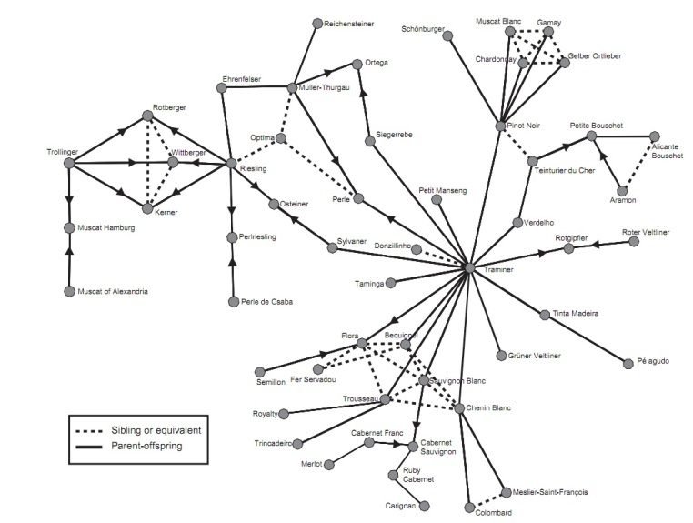 Map of Grape Domestication