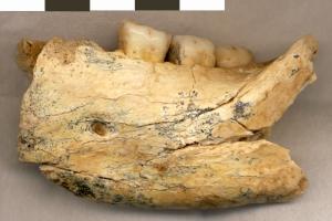 BH-1 Hominin Mandible Fragment