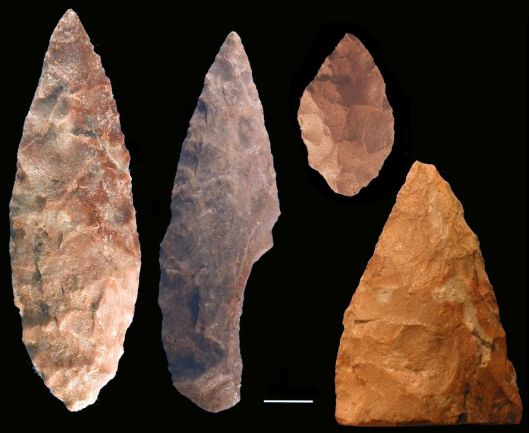 Stone tools known as bifacial points recovered from Blombos Cave, South Africa. They were made during the Middle Stone Age, about 75,000 years ago, by anatomically modern humans. Scale bar: 1 cm (0.4 inches). CREDIT: Courtesy of Christopher Henshilwood, University of the Witwatersrand