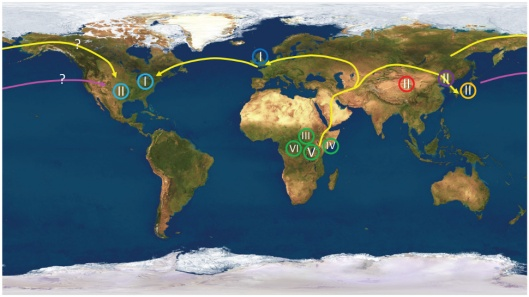 World map featuring the geographic location of the 6 HSV-1 clades with respect to human migration. Each clade — or variant — is depicted by a roman numeral inside a circle. Land migration is depicted by yellow lines and air/sea migration is shown by the pink line. (Kolb, Brandt, et al/PLoS)