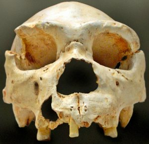 Homo heidelbergensis cranium number five from the Sima. Photo by José-Manuel Benito Álvarez