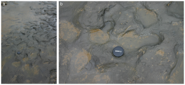 Happisburgh hominin footprints.