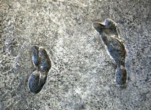 Laetoli Footprints, Tanzania