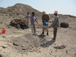 Scientists sieve through sand at the Ledi-Geraru site at the Afar Regional State in Ethiopia, where they discovered the Homo mandible, known as LD 350-1. (Photo credit: Brian Villmoare)