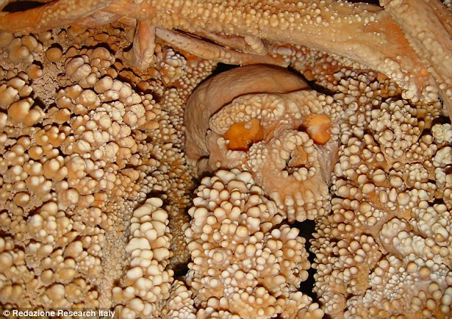 Only the skull and part of a shoulder are visible on Altamura Man. The rest of the body is incorporated into calcite concretions. ITALIAN MINISTRY OF CULTURAL HERITAGE