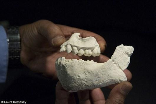 Australopithecus-deyiremeda-3