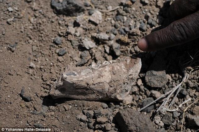 Australopithecus-deyiremeda-4