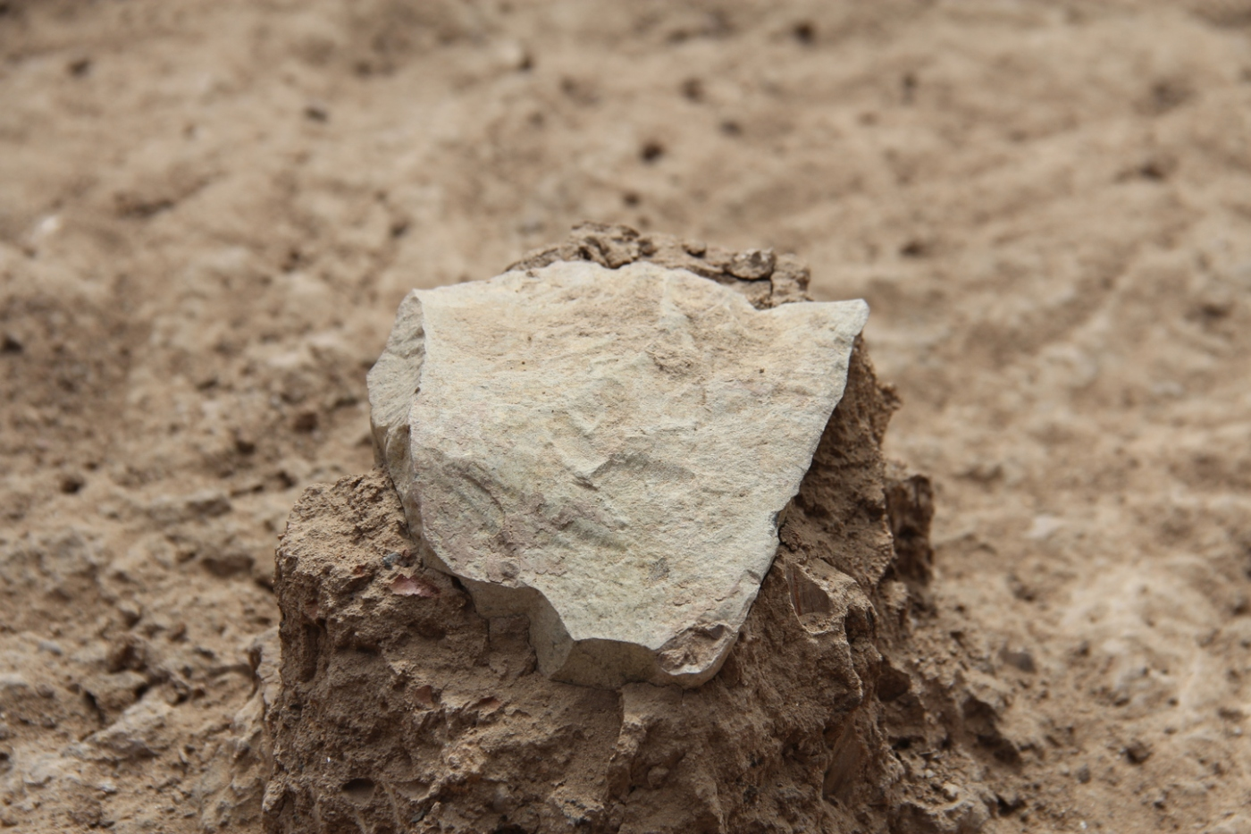 Tool unearthed at excavation site. Credit: MPK-WTAP