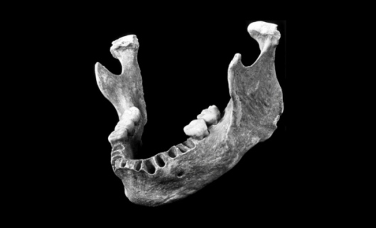 This 40,000–year–old human mandible, found in a Romanian cave, has a mix of human and Neanderthal traits; genetic analysis suggests the individual had a close Neanderthal ancestor 4–6 generations back.
