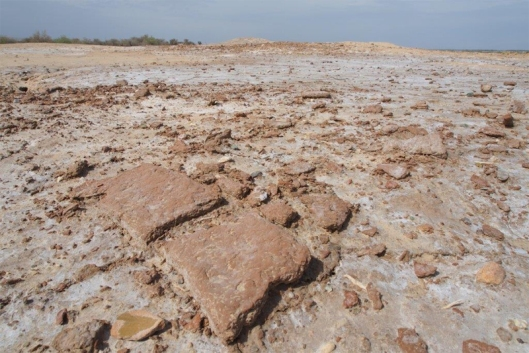 Pottery sherds at a newly-discovered settlement on the Jiroft plain. Image: Professor Peter Pfälzner