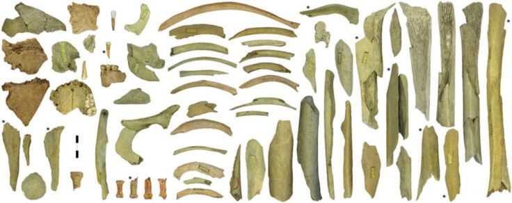 bones-neanderthal-goyet-belgium