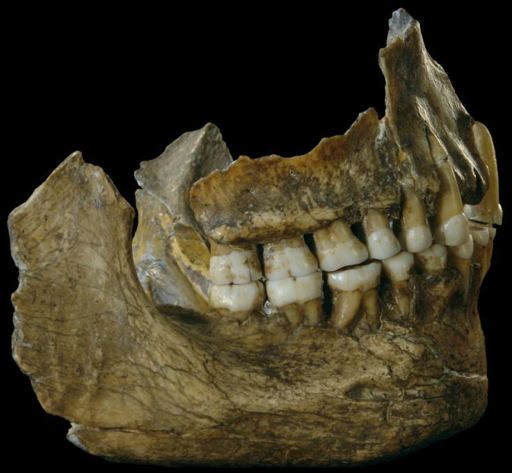01_neanderthal_diet-adapt-1900-1