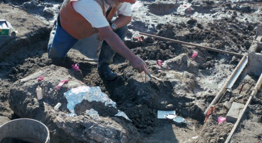 Rock fragments found near part of a mastodon tusk in San Diego, California, suggest that a hominin species lived there about 130,000 years ago. The finding could dramatically alter the narrative of when humans arrived in North America. San Diego Natural History Museum