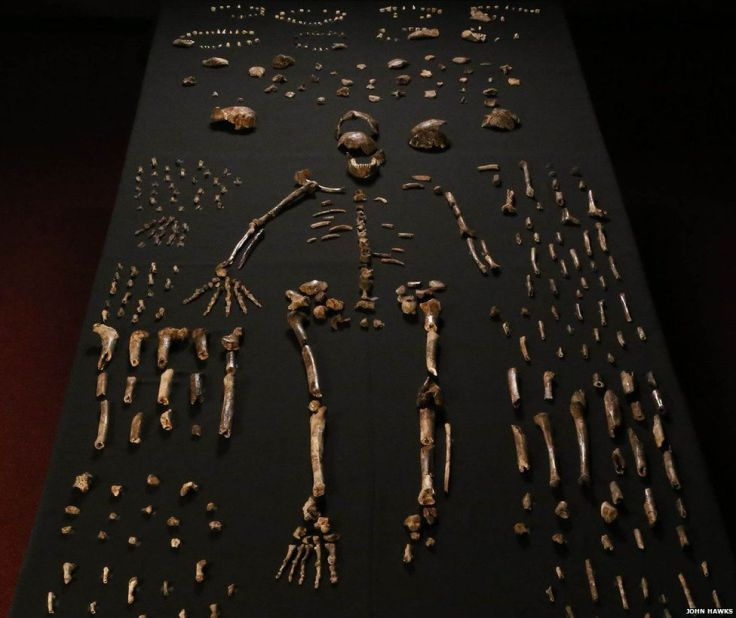 Homo naledi has much in common with early forms of the genus Homo