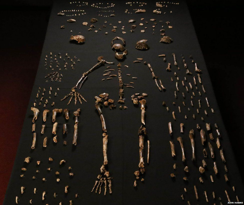 Homo naledi has much in common with early forms of the genus Homo - John Hawks