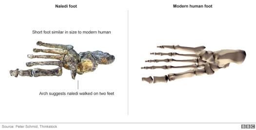 feet_976