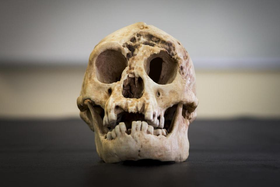 This is a reconstructed skull of Homo floresiensis. (Credit: Stuart Hay, ANU)