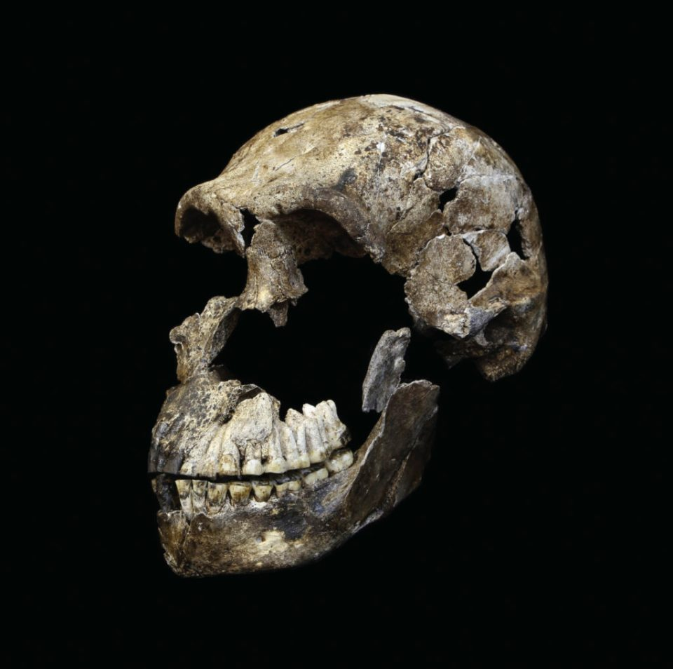 "The male H. naledi specimen named ""Neo"", after being freed from the surrounding matrix"