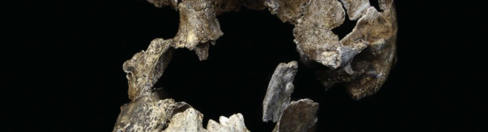 """The male H. naledi specimen named """"Neo"""", after being freed from the surrounding matrix"""