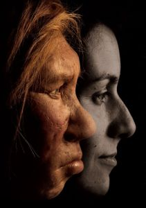 A comparison of Neanderthal anatomy to modern human anatomy. PHOTOGRAPH JOE MCNALLY, NATIONAL GEOGRAPHIC