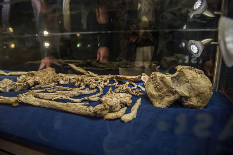 """The skull of Australopithecus prometheus, known as """"Little Foot,"""" is on display now. PHOTOGRAPH BY MUJAHID SAFODIEN, AFP, GETTY"""