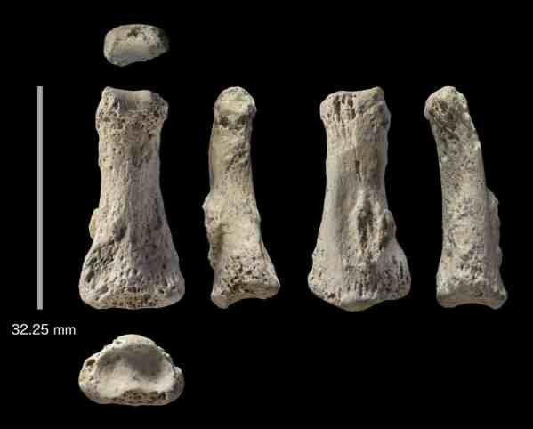 The fossil finger bone from the Al Wusta site, seen from six different angles. Photograph: Ian Cartwright